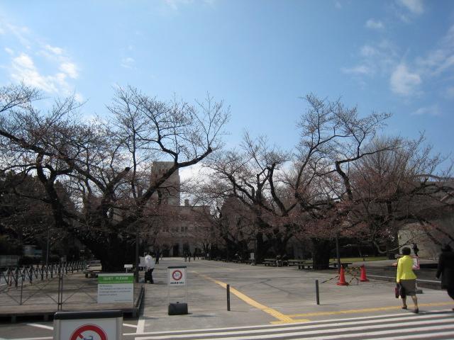 東工大,桜,100327-2
