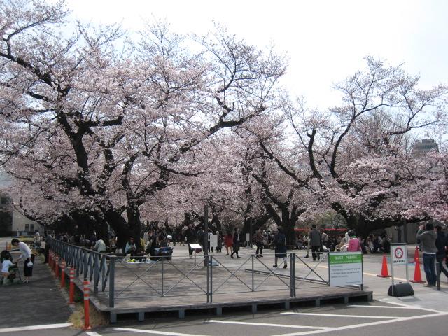 東工大 桜 3/31(木)1
