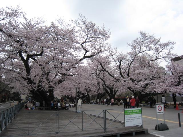 東工大の桜20160401