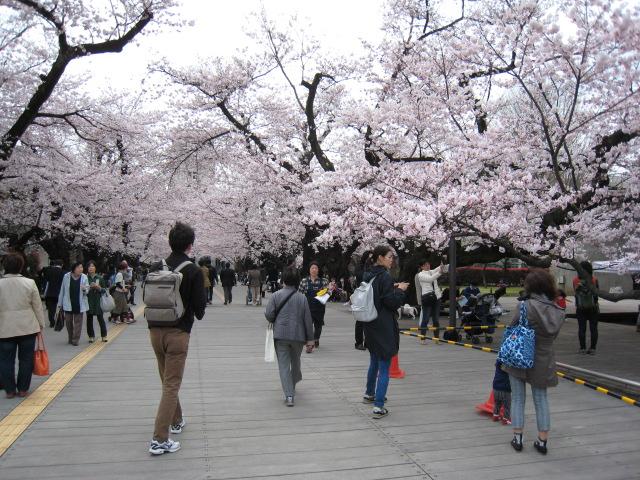 東工大,桜,4/1(金)3