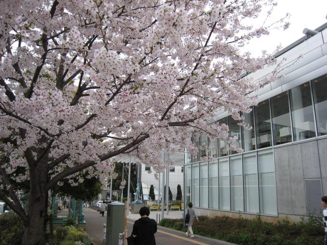大岡山駅前の桜4/6(水)