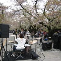 東工大の桜4/10(日)3