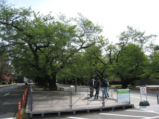 東工大の桜の木20160425-1