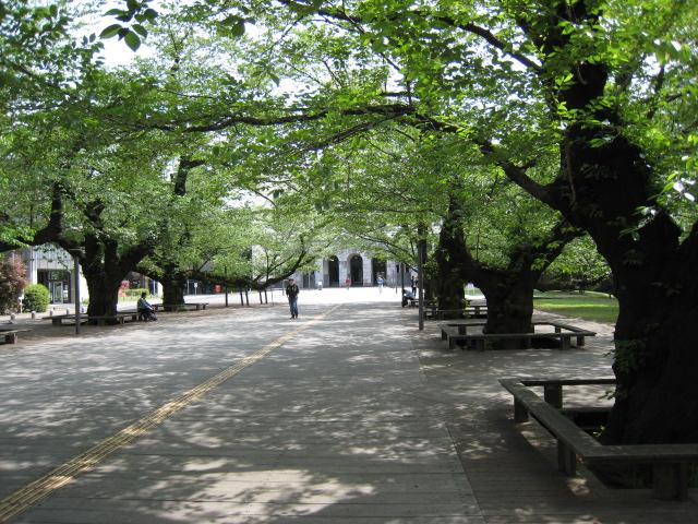 東工大の桜の木20160425-2