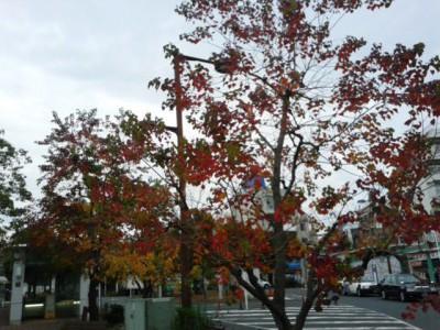 大岡山駅前 紅葉1