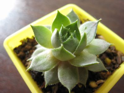多肉植物4