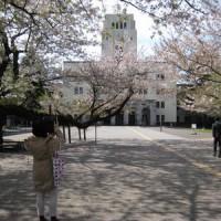 東工大桜 2017.4.15-5