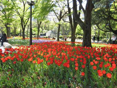 日比谷公園の花壇