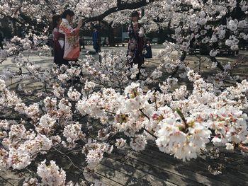 東工大の桜 2018.3.26③