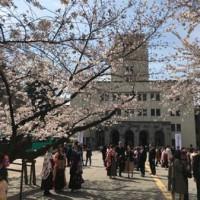 東工大の桜 2018.3.26②