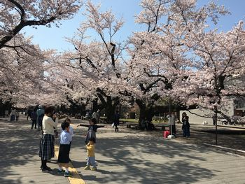 東工大の桜 2018.3.29①