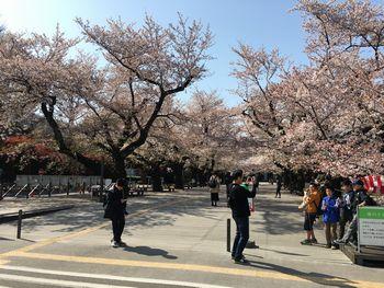 東工大の桜 2018.3.31④