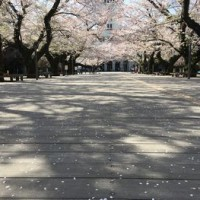 東工大の桜 2018.3.31①