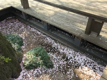 東工大の桜 2018.4.1②
