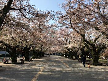 東工大の桜 2018.4.1④