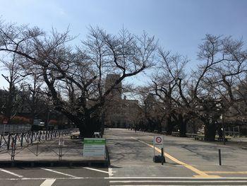 今日の東工大の桜 2018年3月25日(月) 1