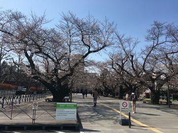 今日の東工大の桜 2018年3月27(水) 1