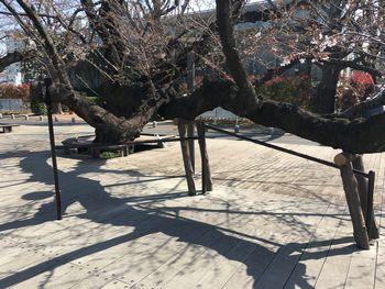 今日の東工大の桜 2018年3月27(水) 3