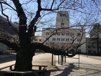 今日の東工大の桜 2018年3月27(水) 4