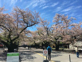 今日の東工大の桜 2019年4月11日(木)-1