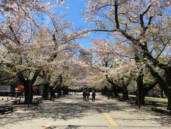 今日の東工大の桜 2019年4月11日(木)-4