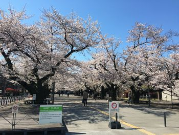 今日の東工大の桜 2019年4月4(木)-1
