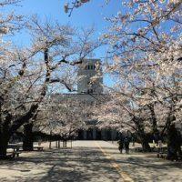 今日の東工大の桜 2019年4月4(木)-4