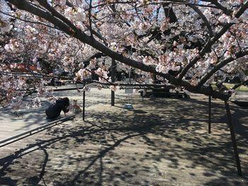 今日の東工大の桜 2019年4月4(木)-5